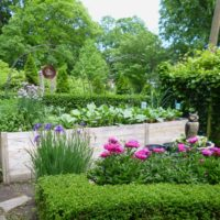 """The first garden shown is a true """"Gardener's Garden."""" The owner is presently enrolled in the Master Garden program. Her garden is the result of many year of planting and planning. Siberian iris and peonies bloom in front of a raised vegetable bed."""