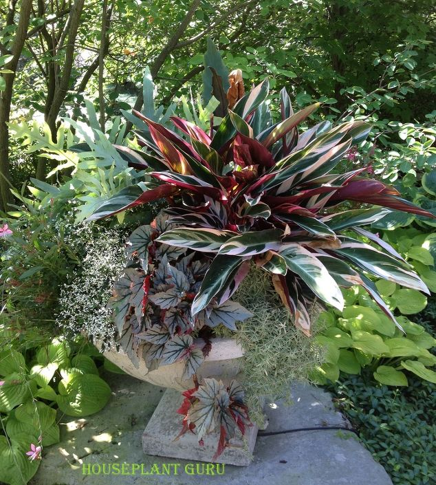By Lisa, an outdoor container which makes  good use of plants usually considered houseplants.